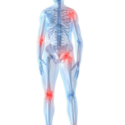 skeleton body with pressure points in red